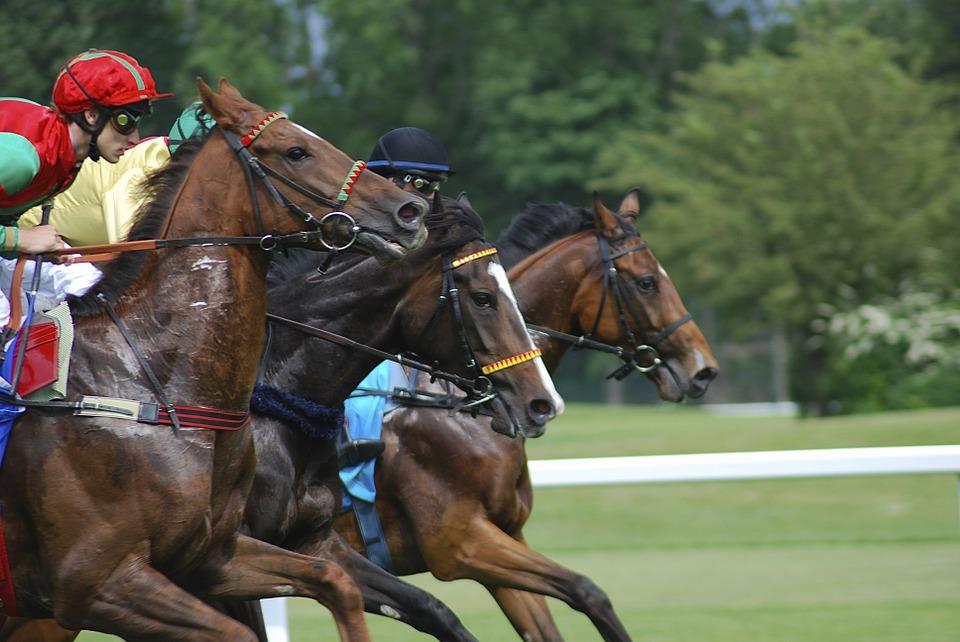 course-cheval